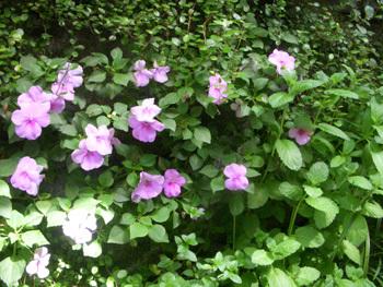 izumicl_flower.jpg